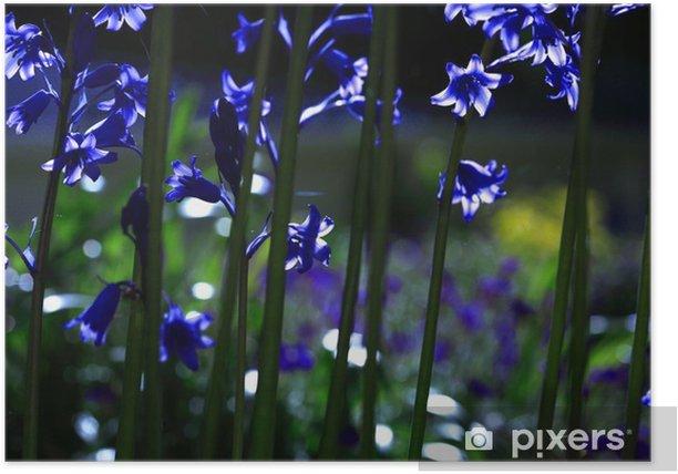 Poster Sonnenbeschienenen Glockenblumen - Blumen