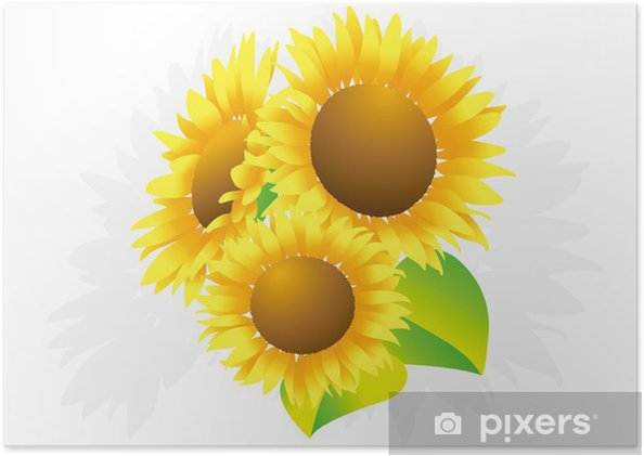 Poster Sonnenblume - Blumen