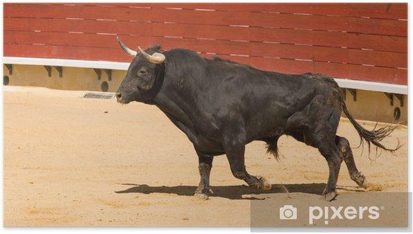 Poster Spanisch Stier • Pixers® - Wir leben, um zu verändern