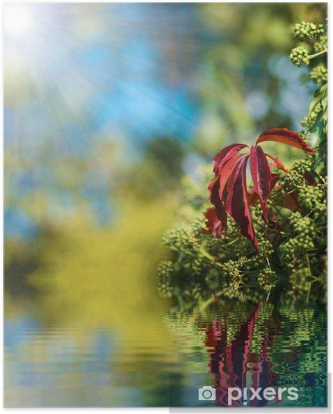 Poster Spiegeln sich im Wasser 2 - Pflanzen
