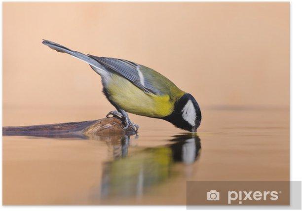 Poster Spiegelungen im Wasser - Vögel