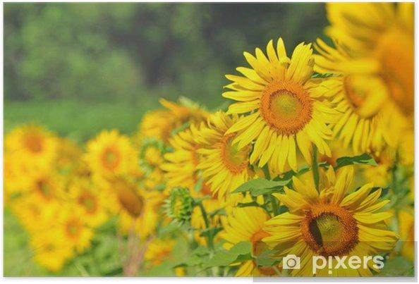 Poster Sunflower giardino - Alberi