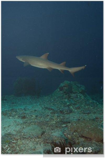 Poster Tiburon - Unterwasser