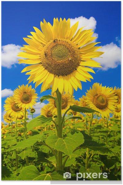 Poster Tipico paesaggio rurale Umbro con girasoli • Pixers® - Wir ...