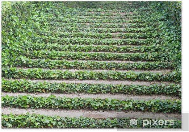 Poster Treppen mit Efeu - Private Gebäude