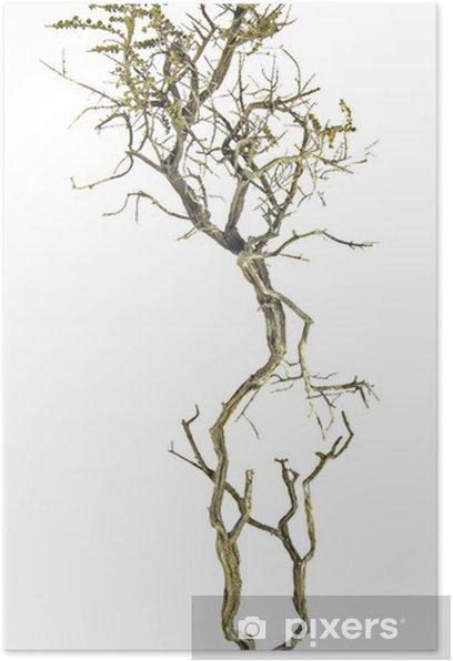 Poster Trockene Zweig - Bäume