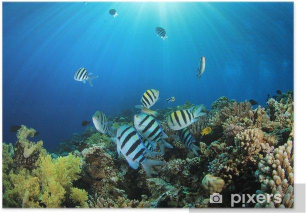 Poster Tropische Fische und Korallenriff im Sonnenlicht - Unterwasserwelt