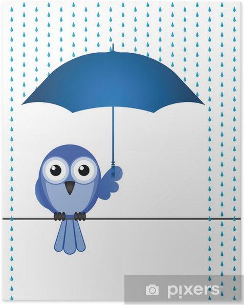 Poster Uccello riparo dalla pioggia - Uccelli