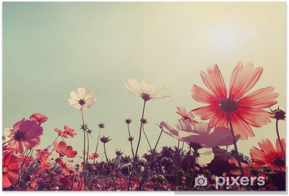Poster Vintage Paesaggio Natura Sfondo Di Belle Cosmo Campo Di Fiori Sul Cielo Con La Luce Del Sole Effetto Filtro Toni Retrò Colore