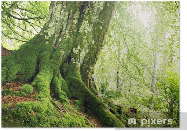 Poster Waldweg - Wälder