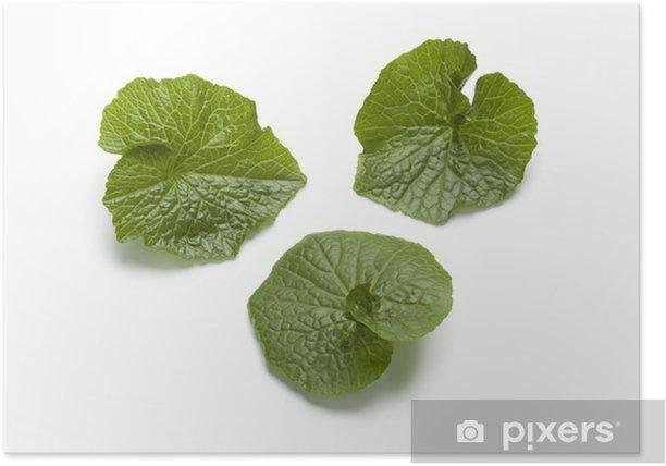 Poster Wasabi Blätter - Asien