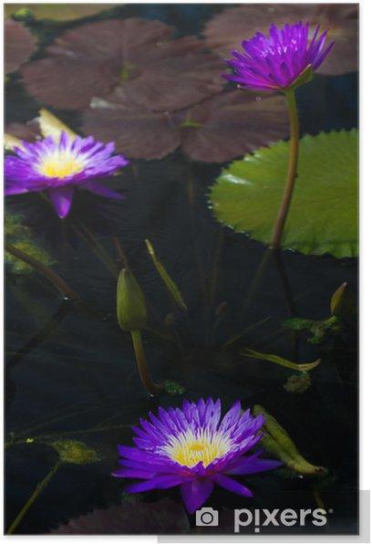 Poster Water lilly - Fröhlichkeit