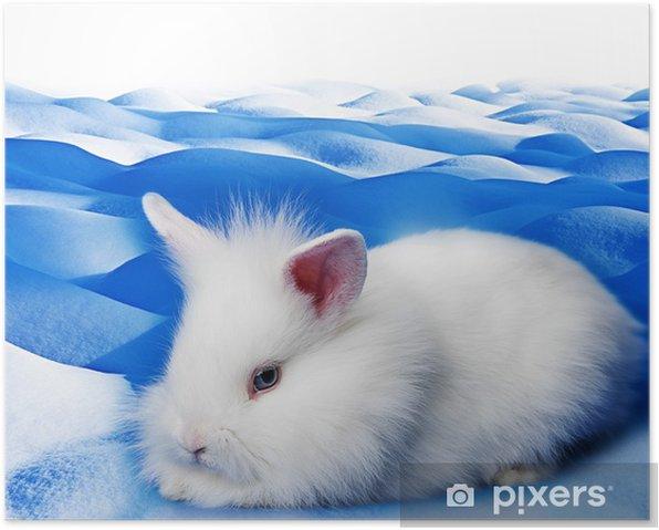 Poster Weiße Kaninchen auf Schnee Hintergrund - Säugetiere