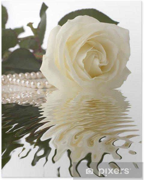 Poster Weiße Rose mit Perlen Nähe schießen