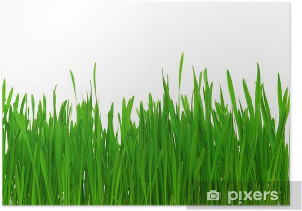 Poster Weizengras - Jahreszeiten