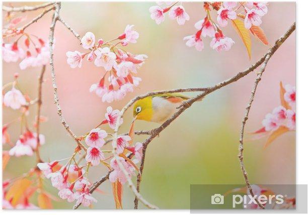Poster White-eye-Vogel und Kirschblüte Sakura oder - Vögel