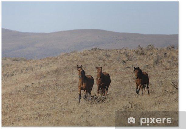 Poster Wilde Pferde, die weg von der Herde - Säugetiere