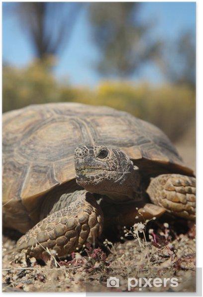 Poster Wüstenschildkröte - Andere Andere
