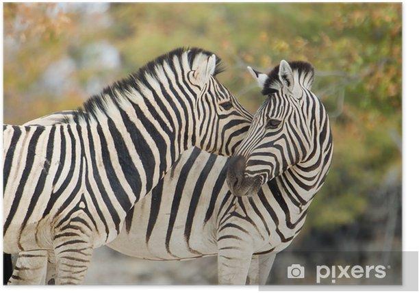 Poster Zebras in Zärtlichkeit - Themen