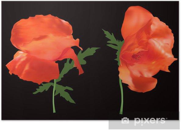 Poster Zwei Mohn Blumen isoliert auf schwarz - Blumen