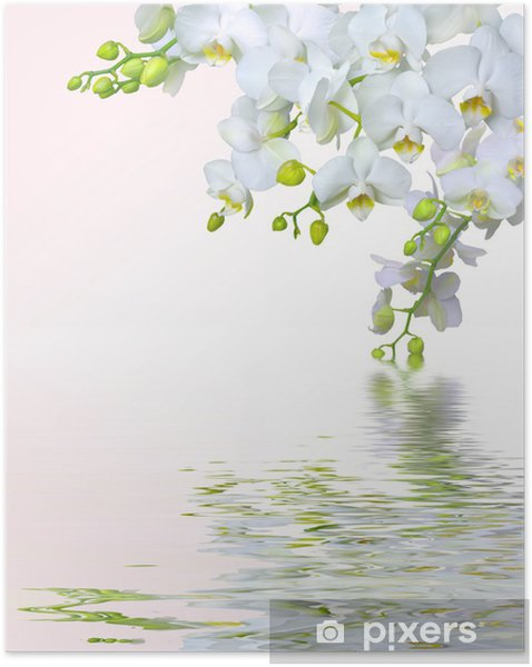 Póster Autoadesivo Beautiful white orchid flowers reflected in water - Temas