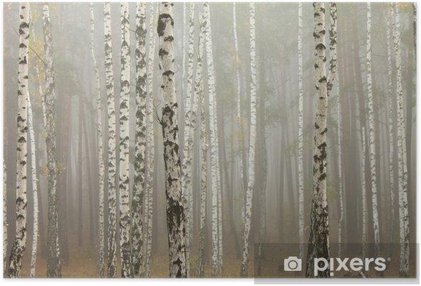 Póster Autoadesivo Fog in birch forest - Temas