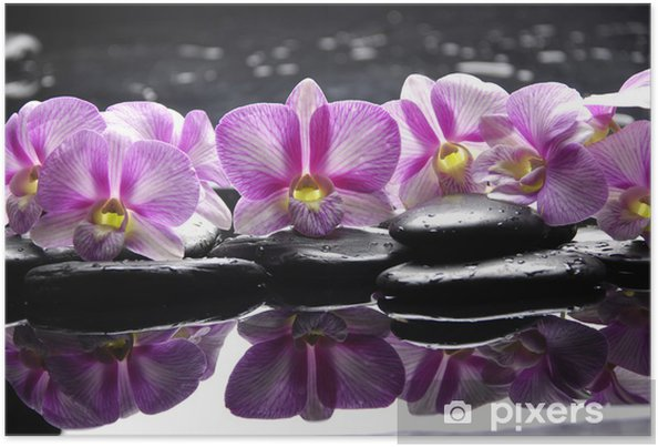 Póster Beautiful pink orchid with black stones reflection - Temas
