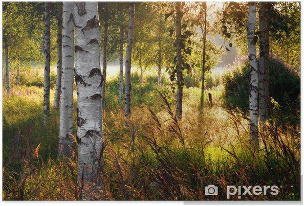 Póster Birch trees - Destino