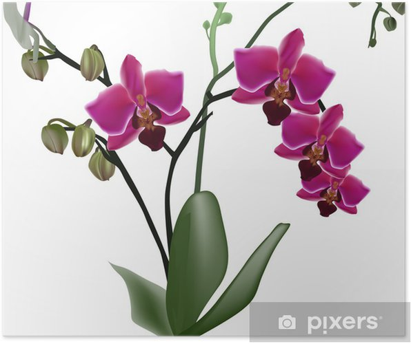 Póster dark pink orchid branch with four flowers - Decalque de parede