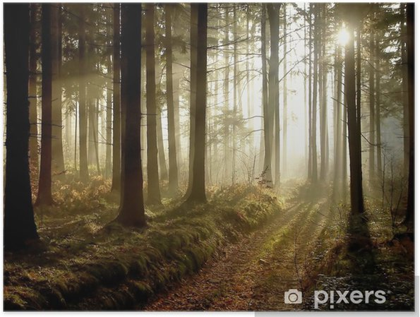 Póster Forest path at sunset - Temas