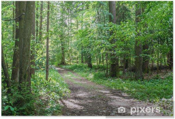 Póster Forest track through lush green woodland - Estações