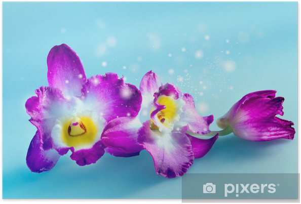 Póster Magical flower orchid - Temas