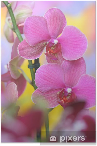 Póster pink orchid - Temas