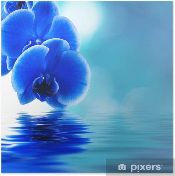 Póster reflejo de las orquideas - Temas