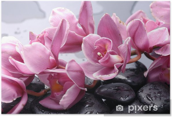Póster Set of cattleya orchid flower and stone with water drops - Temas