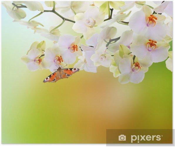 Póster Spring beautiful nature background - Temas