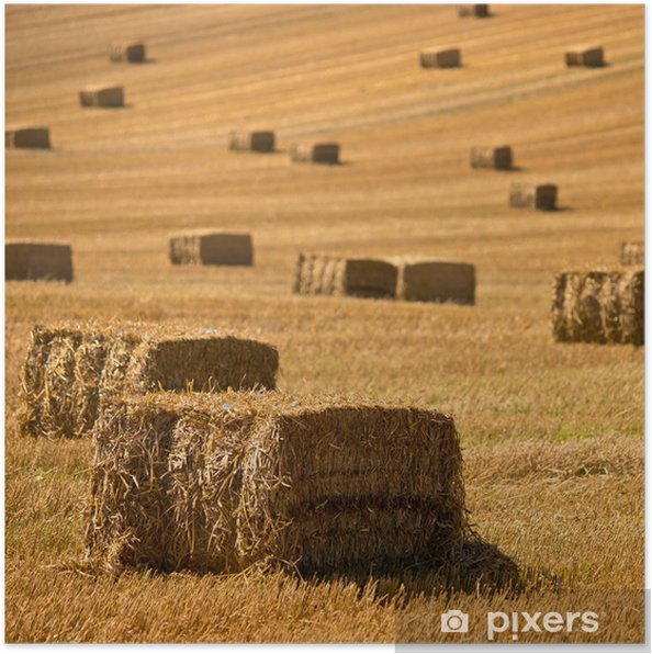 Póster Straw bales background - Agricultura
