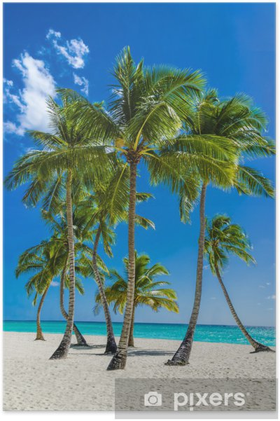 Póster View of an exotic beach with tall palm trees and yellow sand - Palmeiras