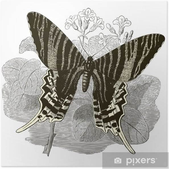 Póster Vintage Butterfly - Outros Outros