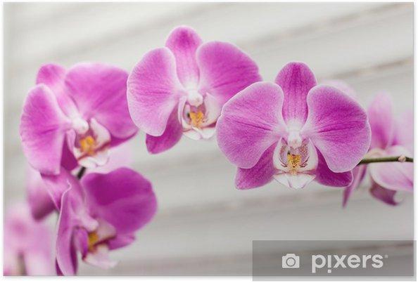 Póster violet orchid flower - Temas