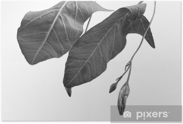 Poster Alan derinliği ile bitki nesnenin Siyah ve beyaz Makro çekim - Grafik kaynakları