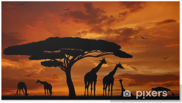 Poster Batan güneşin zürafalar sürüsü -