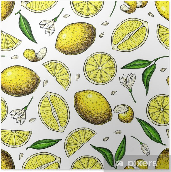 Limon Vektörü Dikişsiz Desen çizimi Yaz Narenciye Baskısı Poster