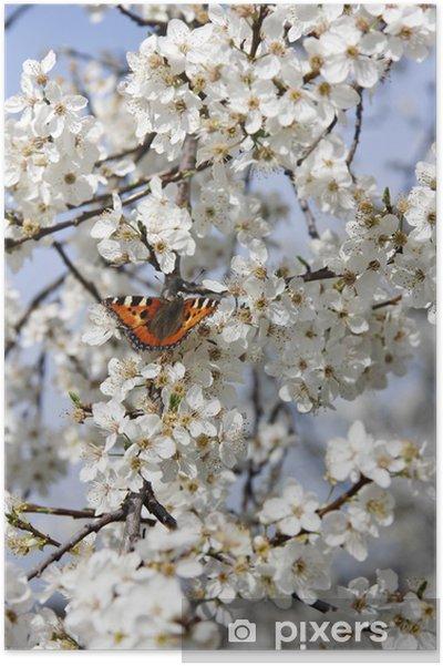 Poster Schmetterling auf Kirschblüte vertikal -