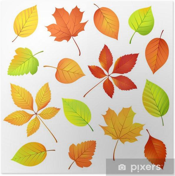 Poster Sonbahar Yaprakları Vektör çizim