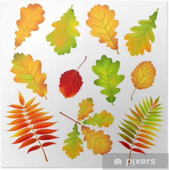 Sonbahar Yaprakları Vektör çizim Poster Pixers Haydi Dünyanızı