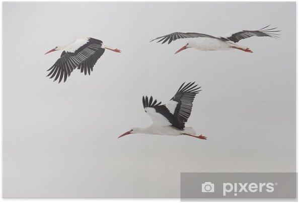 üç Uçan Leylek Poster Pixers Haydi Dünyanızı Değiştirelim