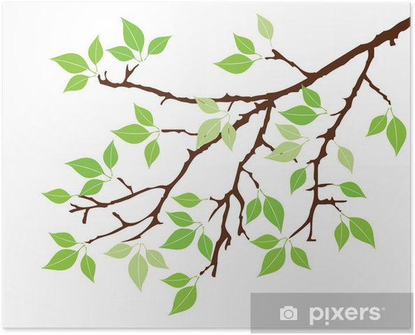 Yaprakları Ile Vektör Ağaç Dalı Poster Pixers Haydi Dünyanızı