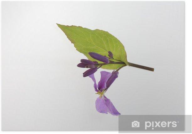 Poster ム ラ サ キ ハ ナ ナ - Fleurs