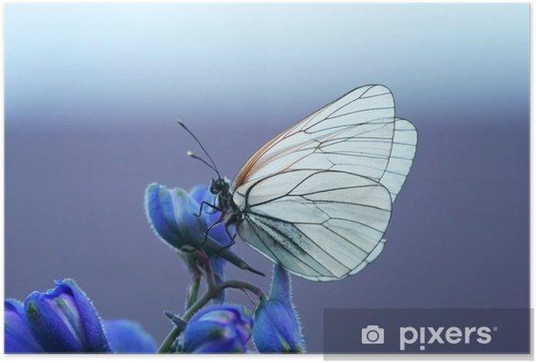 Póster Белая бабочка на синем цветке - Animales